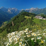 High plateau overlooking Logarska Dolina